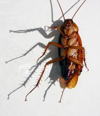 ist2_419565_dead_cockroach
